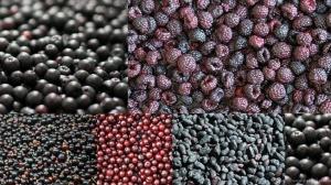 A saját termesztésű gyümölcseink, tele élettel